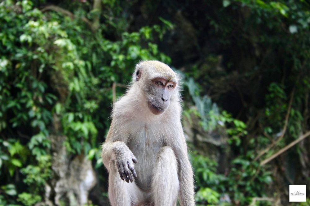 Stiling Monkey In Malaysia
